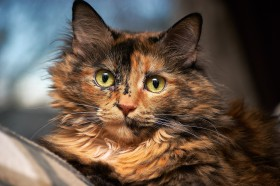 Free photo of Felidae, Carnivore, Cat, Wildlife and Small to medium-sized cats