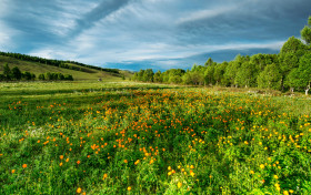 Free photo of Flower, Sky, Cloud, Grass and Plant