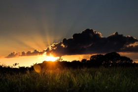 Free photo of Sky, Plant, Cloud, Sunset and Atmosphere