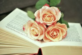 Free photo of Plant, Book, Flower, Wedding Ceremony Supply and Petal