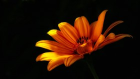 Free photo of Plant, Petal, Flower, Pedicel and Sky