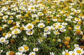 Free photo of Plant, White, Flower, Flowering Plant and Petal
