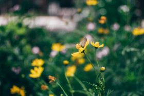 Free photo of Butterfly on yellow flower