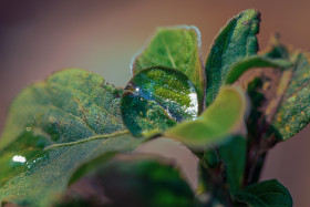 Free photo of Water Droplet on green leaf