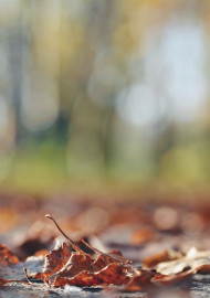 Free photo of Low angle macro of dry brown autumn leaves