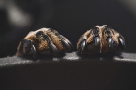 Free photo of Macro of tiny black dog paws in dark
