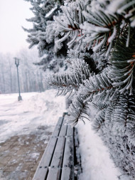 Free photo of Macro of frosty spruce tree on a cold winter day
