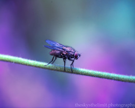 Free photo of Selective focus photography of fly