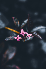 Free photo of Close up of 3 tiny pink flowers with shallow background