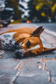 Free photo of Selective focus photo of Dog laying on bricks road