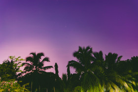 Free photo of Silhouette  Of Palm Trees At Night Under Clear Purple Sky