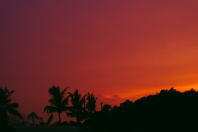 Free photo of Afterglow of sunset on clouds with palm trees