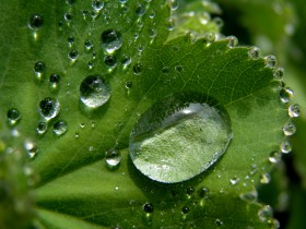 Free photo of Water, Plant, Hair, Organism and Liquid