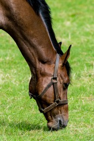 Free photo of Eye, Plant, Horse, Horse Supplies and Working animal