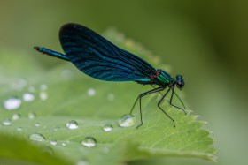 Free photo of Arthropod, Pollinator, Insect, Pest and Fluid