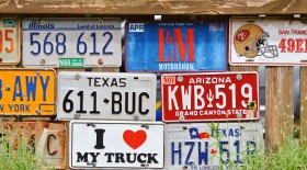 Free photo of Plant, Vehicle Registration Plate, Motor Vehicle, Art and Paint