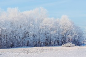 Free photo of Snow, Natural Landscape, Sky, Horizon and Branch