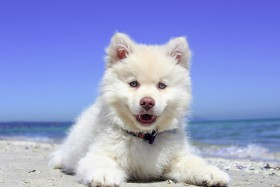 Free photo of Sky, Water, Dog, Canidae and Dog breed