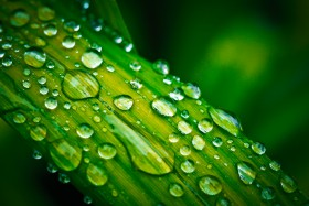 Free photo of Liquid, Plant, Water, Black Hair and Green